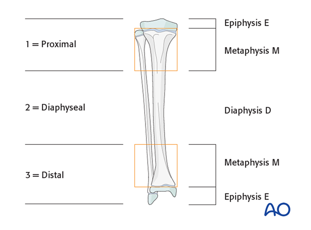 Areas of pediatric bones