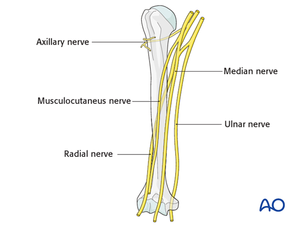 neurovascular injuries