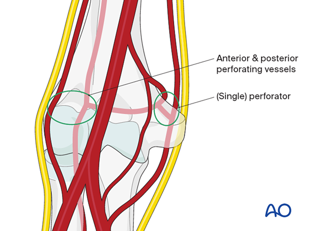 Perfusion of the articular block
