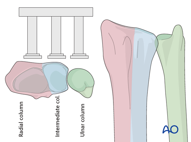 anatomy of the distal forearm