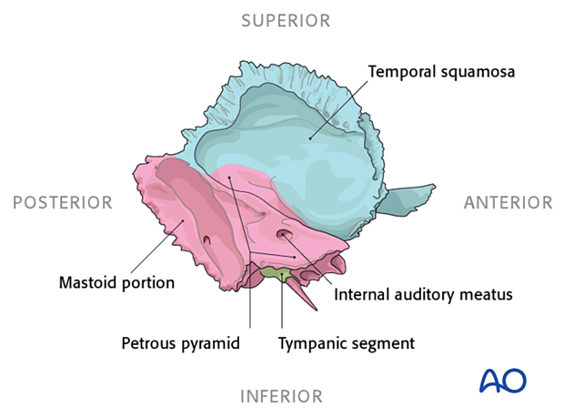 Medial view of the temporal bone