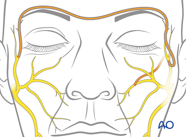 selective reinnervation with contralateral facial nerve and masseteric nerve