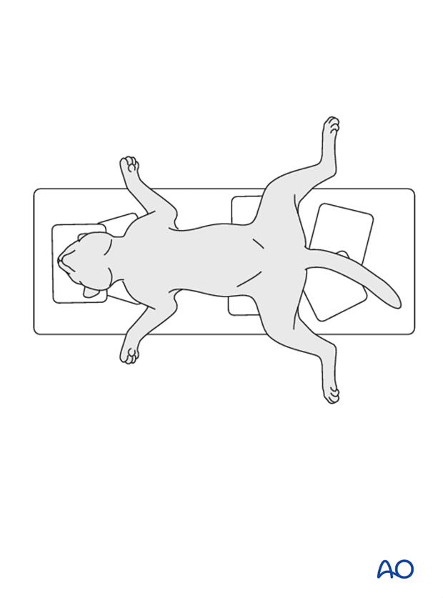 dorsal recumbency position