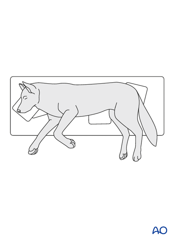 lateral recumbency position