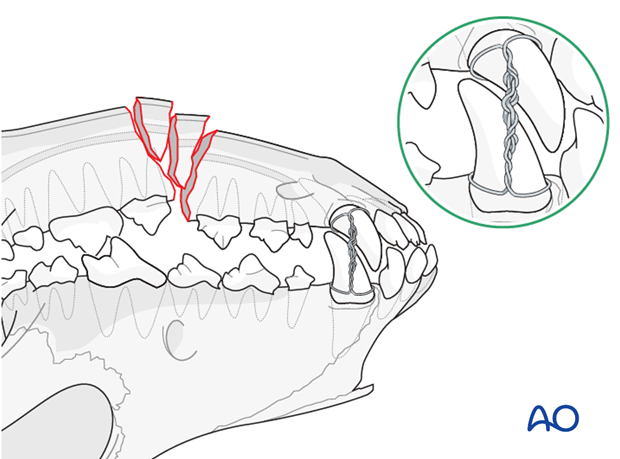 Dog mandible body unilateral comminuted fracture mouth locked in normal occlusion