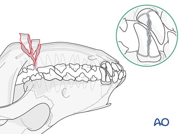Dog mandible caudal unilateral comminuted fracture mouth locked in normal occlusion