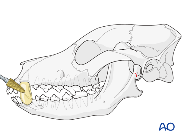 Composite smoothening on canine teeth of a dog with mandible TMJ fracture