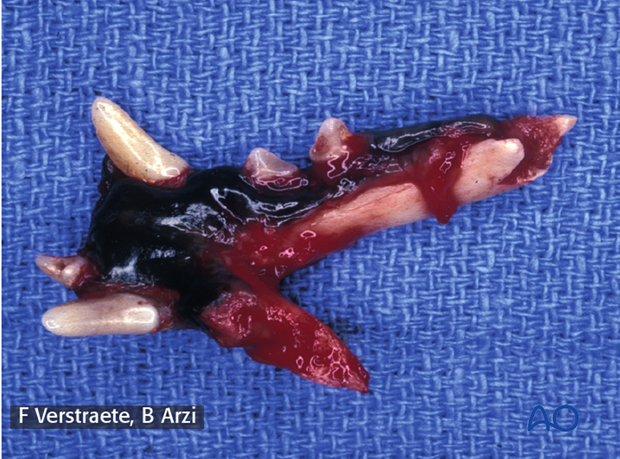 Case example of fish-mouth salvage procedure in a dog mandible