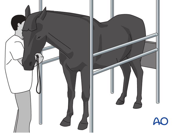 screw fixation in the standing horse