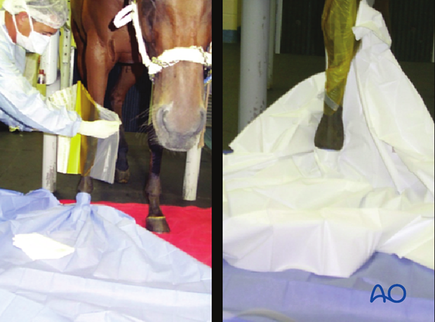 surgery in the standing horse